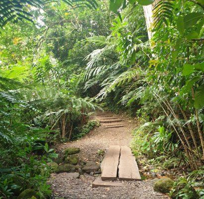 Oahu Itinerary - Manoa Falls