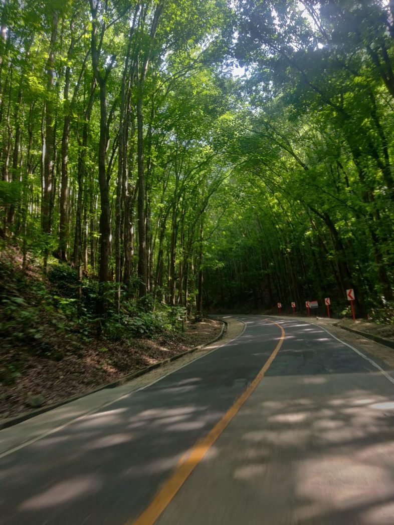 Man-Made Forest: the most beautiful places in Bohol