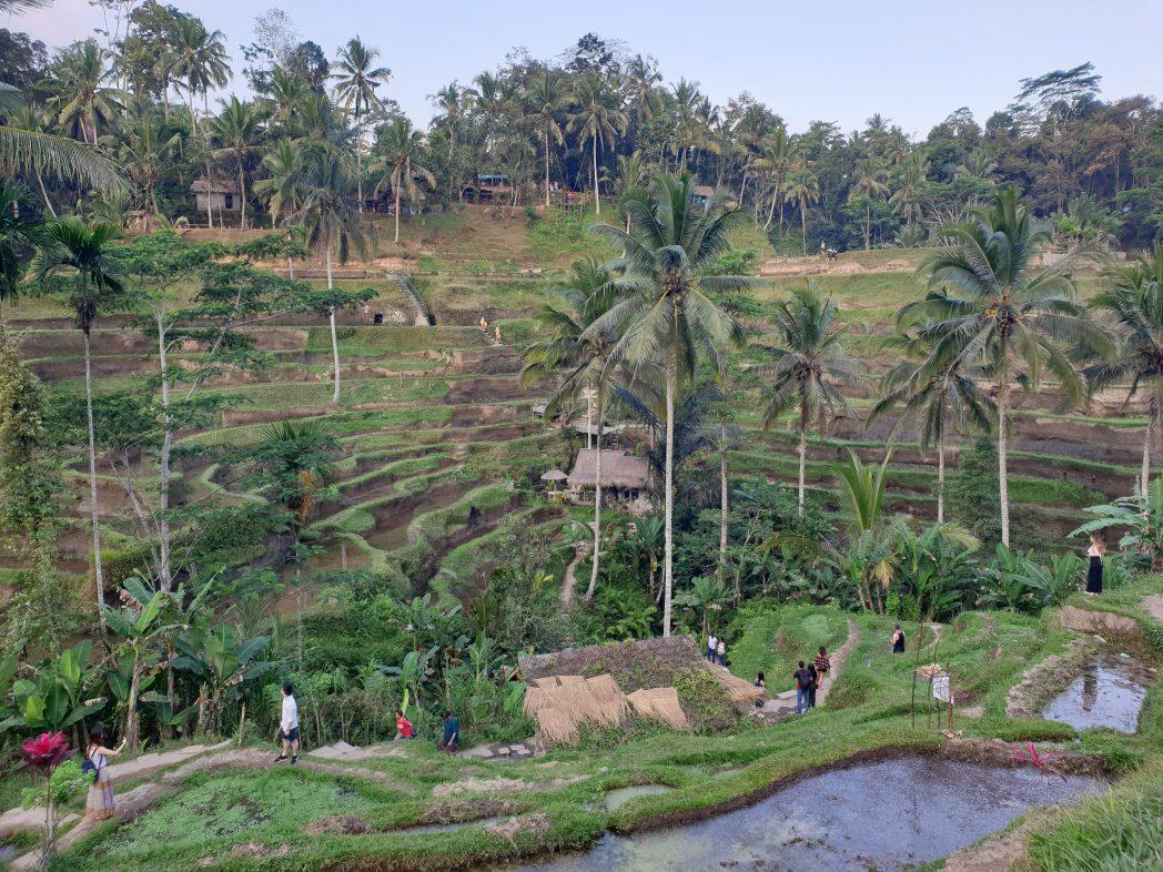 Mistakes to avoid in Bali - monkeys