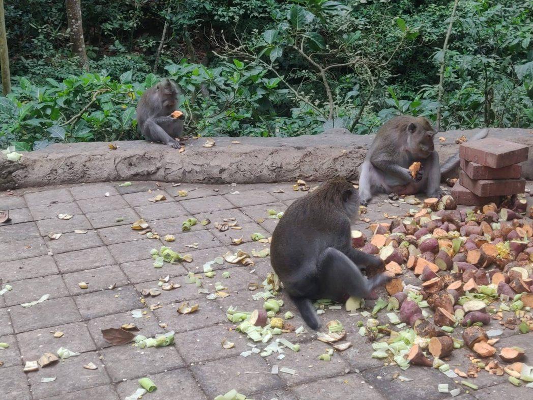 Monkeys - top mistakes to avoid in Bali